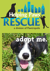 Helping Paws Rescue - Adopt Me
