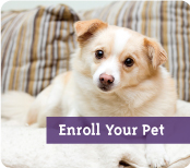 Enroll Your Pet