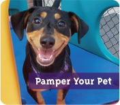 Pamer Your Pet